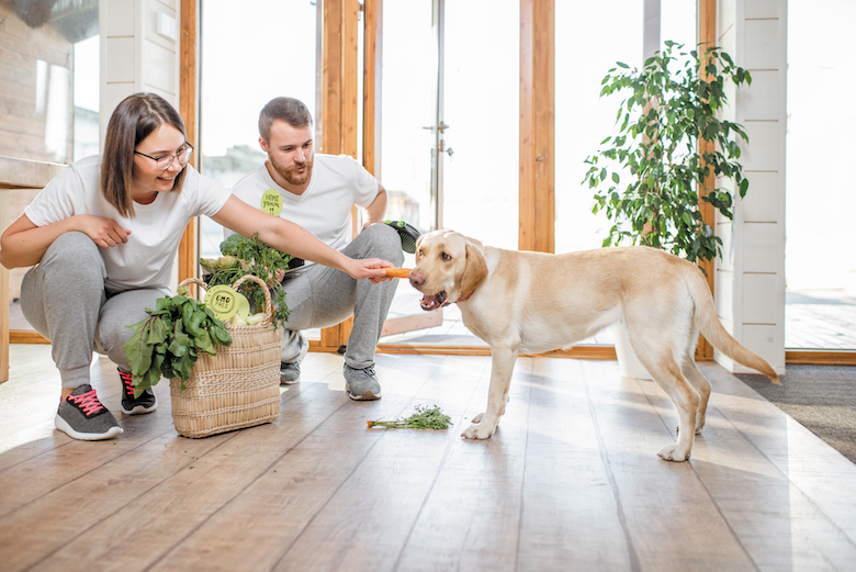 Photo of 5 People Foods That Are Good For Dogs
