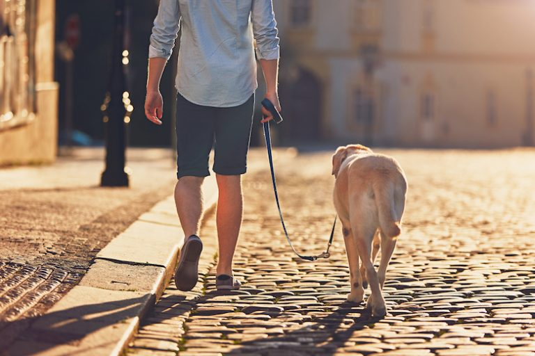 Does Your Dog Find 'Snacks' on Walks? Here's What You Should Do