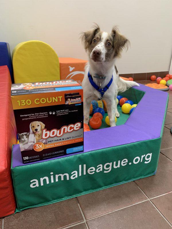 October 2020 dog events