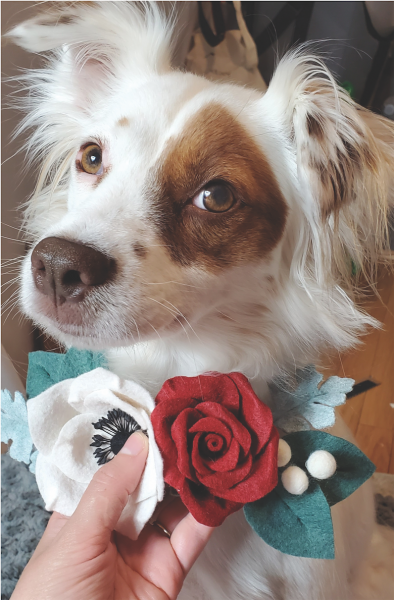 floral clips for pets