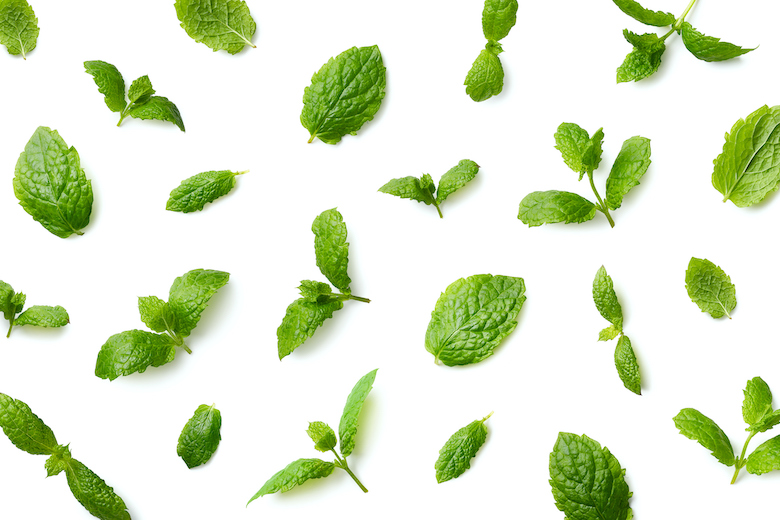 can dogs eat peppermint