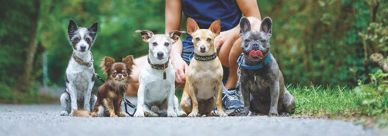 socialize your dog